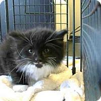 Adopt A Pet :: *PIXEL - Sacramento, CA