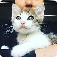 Adopt A Pet :: Culver - Studio City, CA
