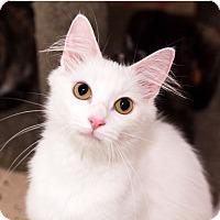 Adopt A Pet :: Eve - Seville, OH