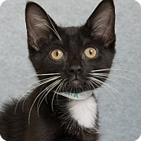 Adopt A Pet :: Athena - Fort Collins, CO