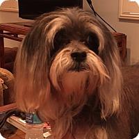 Adopt A Pet :: Shelby - Boynton Beach, FL