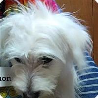 Adopt A Pet :: Darel - Vallejo, CA