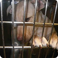 Adopt A Pet :: VINNY - Jacksonville, FL