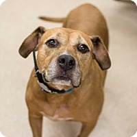Adopt A Pet :: Bella -adopted - Decatur, GA