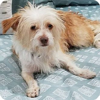 Terrier (Unknown Type, Small) Mix Dog for adoption in Meridian, Idaho - Barbara