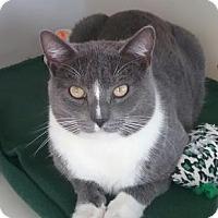 Adopt A Pet :: Dreamy McHeartthrob - Harrisonburg, VA