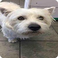 Adopt A Pet :: A417827 - San Antonio, TX