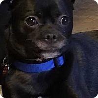 Adopt A Pet :: Remi Valentine - Boston, MA