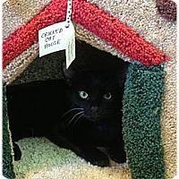Adopt A Pet :: Miguel - Bonita Springs, FL