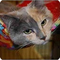 Adopt A Pet :: Latte - Modesto, CA