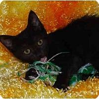 Adopt A Pet :: Alyssa - Colmar, PA