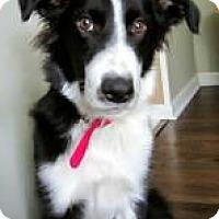 Adopt A Pet :: Ronan - Bellevue, NE