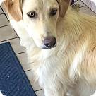 Adopt A Pet :: Roush
