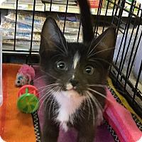 Adopt A Pet :: Tillie - Gilbert, AZ