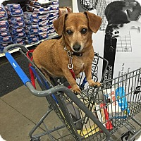 Adopt A Pet :: Penny 2 - Georgetown, KY