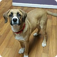 Adopt A Pet :: Brutus - Lisbon, OH