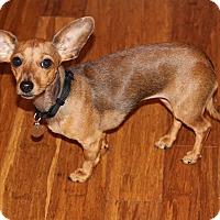 Adopt A Pet :: Frannie - Atlanta, GA