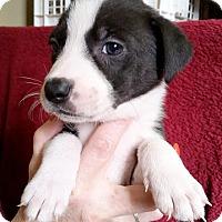 Adopt A Pet :: Janie - Cincinnati, OH