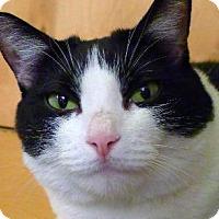 Adopt A Pet :: Stovetop - New York, NY