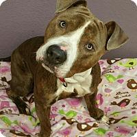 Adopt A Pet :: Beauregard - Lisbon, OH