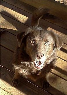 Labrador Retriever Mix Dog for adoption in Lawrenceville, Georgia - Mary/Merida