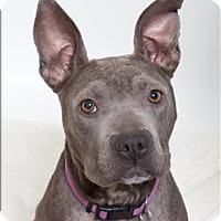 Adopt A Pet :: Electra - San Luis Obispo, CA