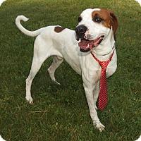 Adopt A Pet :: Homer - Lexington, NC