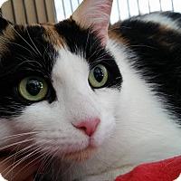 Adopt A Pet :: Pumpkin - Whitby, ON