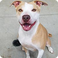 Adopt A Pet :: Jenny - Lompoc, CA
