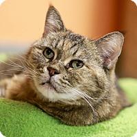 Adopt A Pet :: Mara - Kettering, OH
