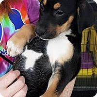 Adopt A Pet :: TWISTER - Powder Springs, GA