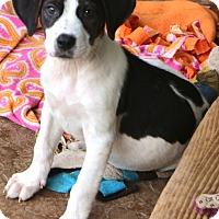 Adopt A Pet :: Lancaster - MEET ME - Woonsocket, RI