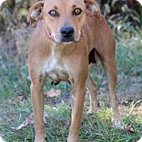 Adopt A Pet :: Kat - Waldorf, MD