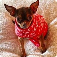 Adopt A Pet :: Tiny Rosa ADOPTED!! - Lynnwood, WA