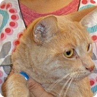Adopt A Pet :: Marian - Wildomar, CA