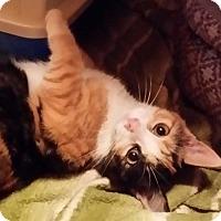 Adopt A Pet :: Bea - Brighton, MO