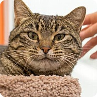 Adopt A Pet :: PRIM - Pt. Richmond, CA