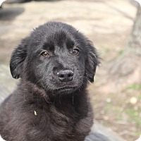 Adopt A Pet :: Link - Glastonbury, CT