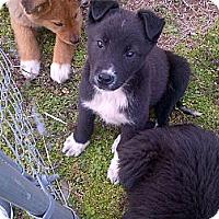 Adopt A Pet :: Eyeore - Albany, NY