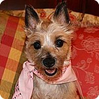 Adopt A Pet :: Toto - Princeton, KY