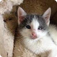 Adopt A Pet :: Finn - East Hanover, NJ