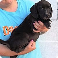 Adopt A Pet :: Branwell - Starkville, MS
