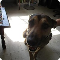 Adopt A Pet :: Shiloh - Visalia, CA