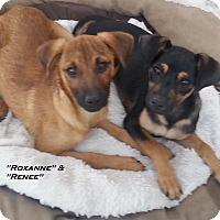 Adopt A Pet :: Roxanne - El Cajon, CA