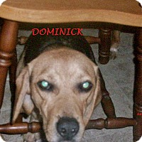 Adopt A Pet :: DOMINICK - Ventnor City, NJ