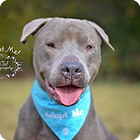 Adopt A Pet :: Egor - Fort Valley, GA