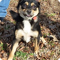 Adopt A Pet :: Cherry - Arlington, TN
