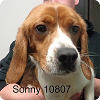 Adopt A Pet :: Sonny - baltimore, MD