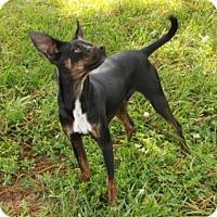 Adopt A Pet :: Radar - Allentown, PA
