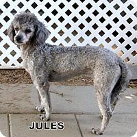 Adopt A Pet :: Jules - Lindsay, CA